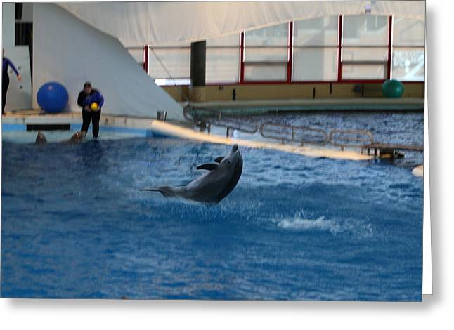 Dolphin Show - National Aquarium In Baltimore Md - 121258 Greeting Card by DC Photographer