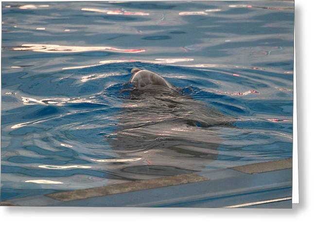 Dolphin Show - National Aquarium In Baltimore Md - 12126 Greeting Card