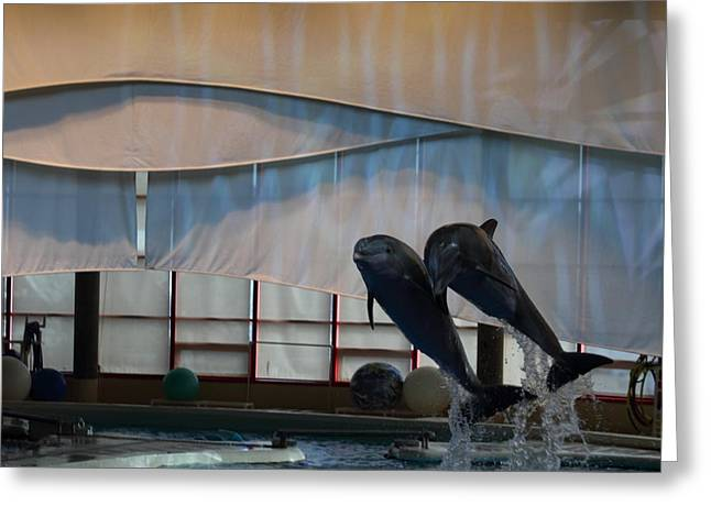 Dolphin Show - National Aquarium In Baltimore Md - 121277 Greeting Card by DC Photographer