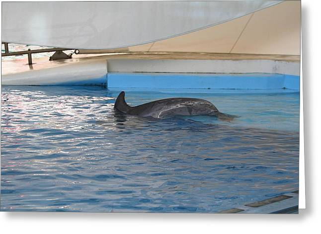 Dolphin Show - National Aquarium In Baltimore Md - 12128 Greeting Card