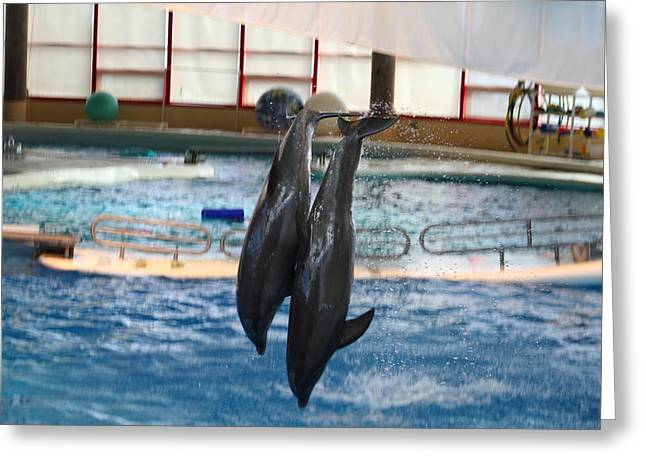 Dolphin Show - National Aquarium In Baltimore Md - 121280 Greeting Card by DC Photographer