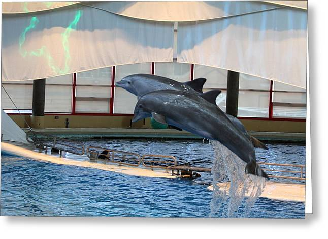 Dolphin Show - National Aquarium In Baltimore Md - 121282 Greeting Card