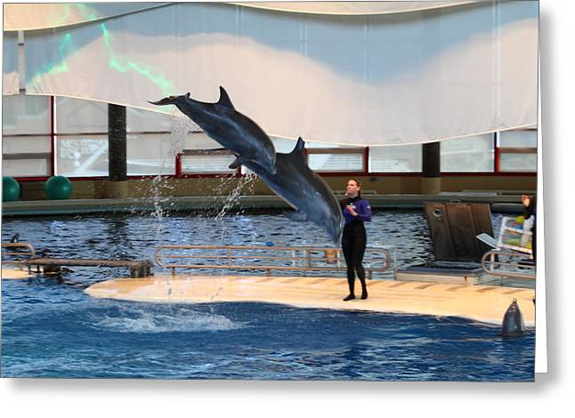 Dolphin Show - National Aquarium In Baltimore Md - 121294 Greeting Card by DC Photographer
