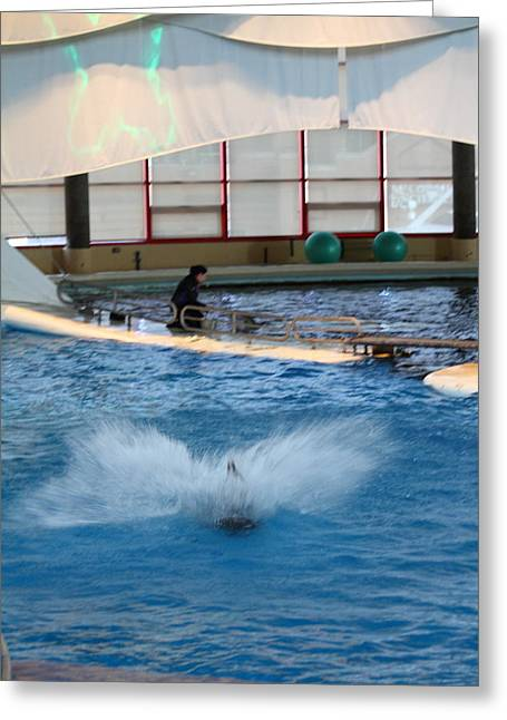 Dolphin Show - National Aquarium In Baltimore Md - 121297 Greeting Card