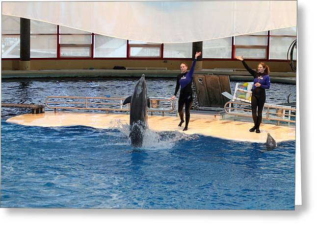 Dolphin Show - National Aquarium In Baltimore Md - 121299 Greeting Card by DC Photographer
