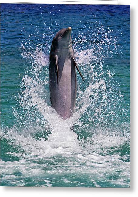 Dolphin Standing Above Water, Roatan Greeting Card by Keren Su