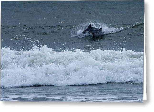 Greeting Card featuring the photograph Dolphins At Play by Greg Graham