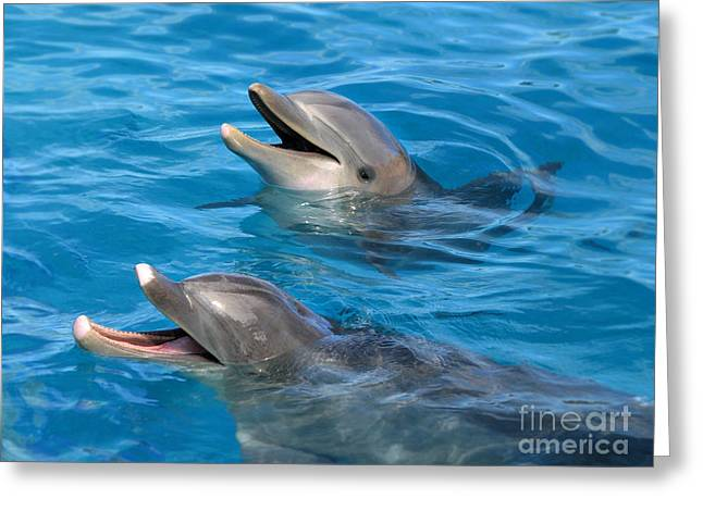 Greeting Card featuring the photograph Dolphins by Kristine Merc