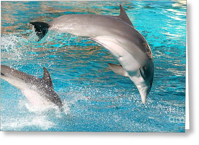 Dolphins Show Greeting Card by Michal Bednarek