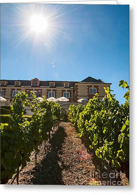 Domaine Carneros Sun - Winery And Vineyard With Sun Flare In Napa Valley California Greeting Card by Jamie Pham