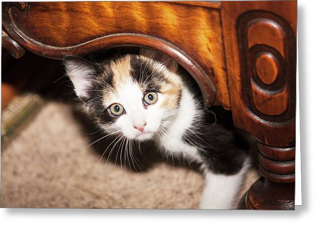 Domestic Calico Kitten Peeking Greeting Card by Piperanne Worcester