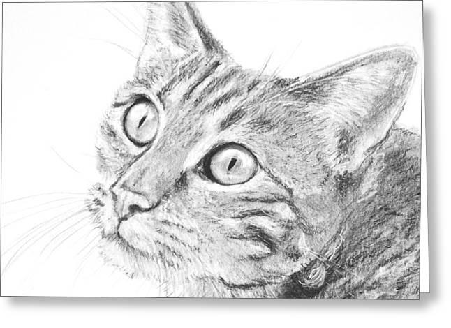 Domestic Cat Portrait Greeting Card