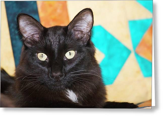 Domestic Shorthair Black Cat Sitting Greeting Card