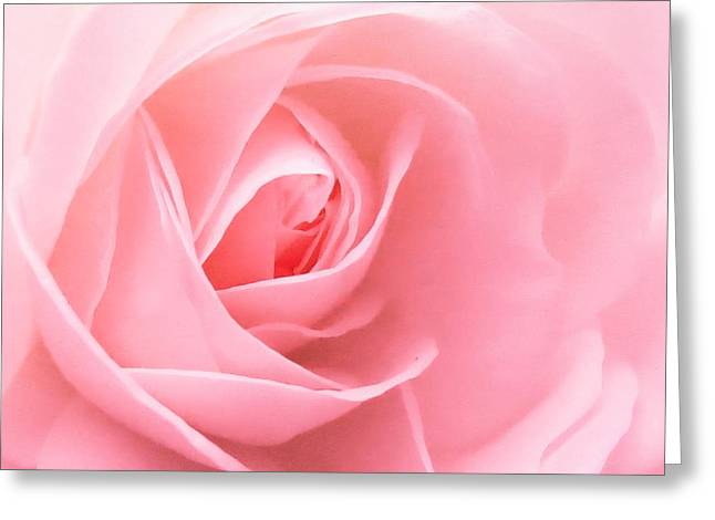 Donation Rose Greeting Card