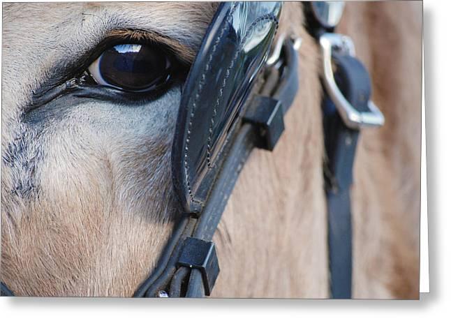 Donkey Eye Greeting Card