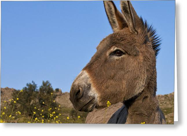 Donkey In Greece Greeting Card by Jean-Louis Klein and Marie-Luce Hubert