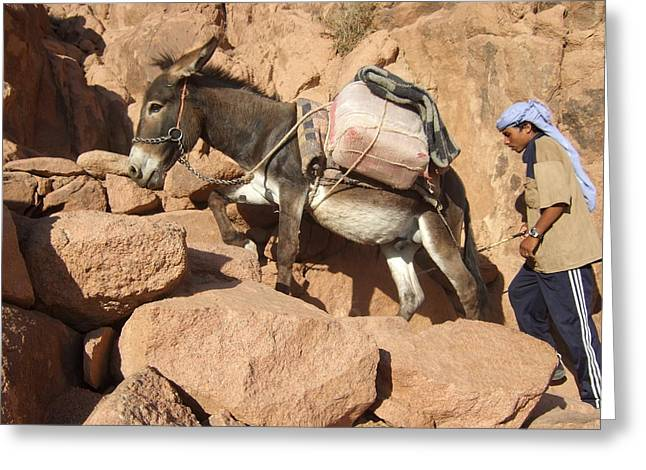 Donkey Of Mt. Sinai Greeting Card
