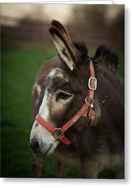 Donkey Greeting Card by Shane Holsclaw