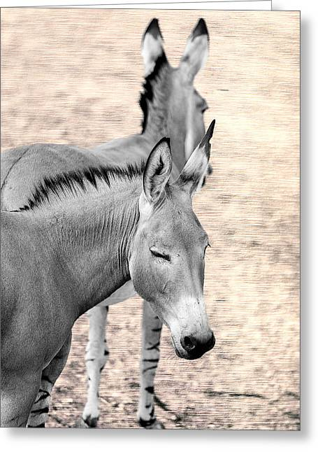 Donkeyflected Greeting Card by Bill Tiepelman
