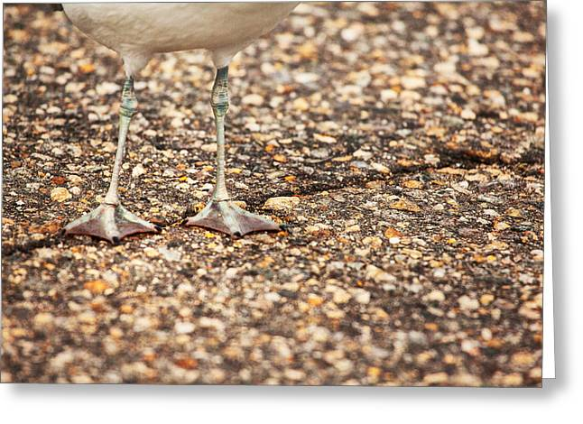 Don't Step On The Crack Greeting Card by Karol Livote