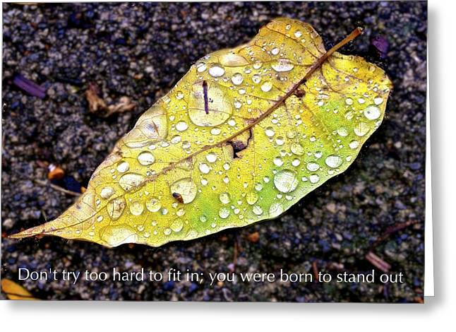 Don't Try Too Hard To Fit In You Were Born To Stand Out Greeting Card