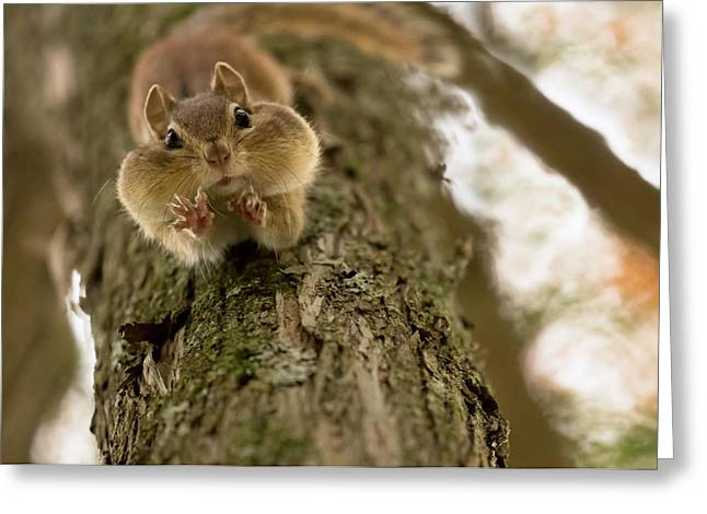 Don't You Even Try To Grab My Nuts! Greeting Card