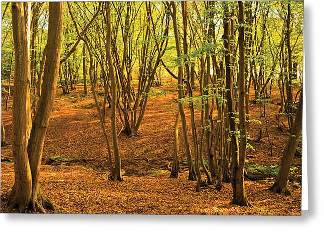 Greeting Card featuring the photograph Donyland Woods by David Davies