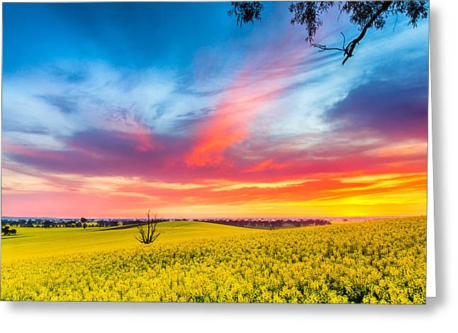 Craig francisco greeting cards dookie sunrise greeting card m4hsunfo