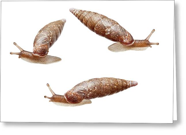 Door Snail Greeting Card by Natural History Museum, London