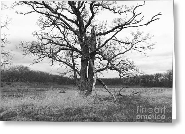 Dormant Beauty Bw Greeting Card