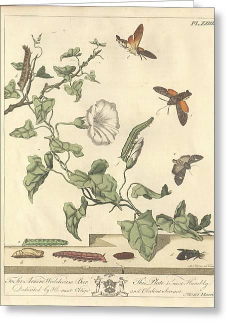Dot Moth Greeting Card
