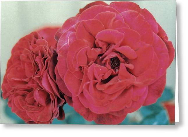 Double Desert  Red Roses Greeting Card by Dusty Rose