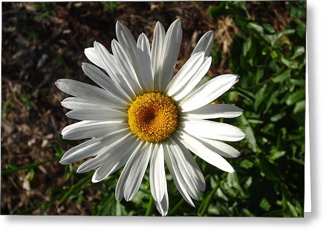 Double Down Daisy Greeting Card