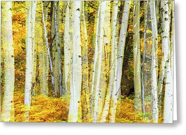 Double Exposure Of An Aspen Grove Greeting Card by Panoramic Images