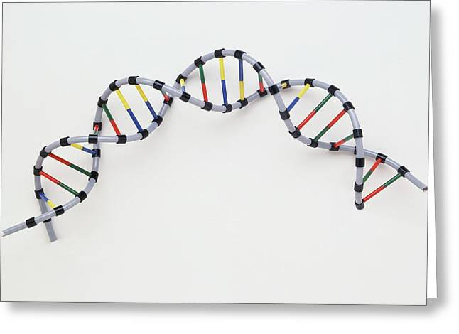 Double Helix Of Human Dna Greeting Card
