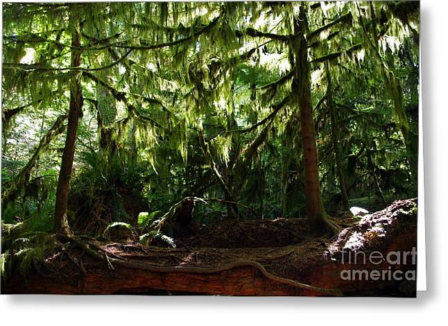 Double Nurse Log Greeting Card by Erin Baxter