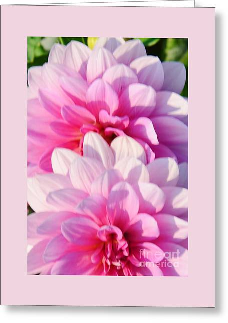 Double Pink Greeting Card by Kathleen Struckle