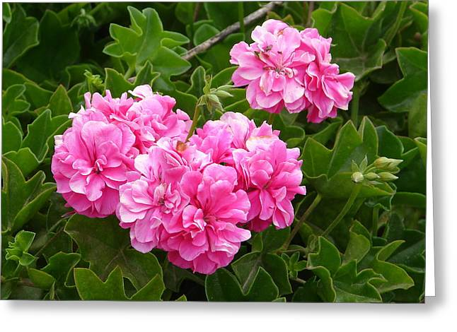 Greeting Card featuring the photograph Double Pink by Lew Davis