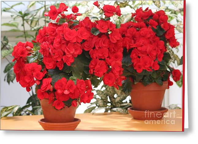 Greeting Card featuring the photograph Double Red Begonias by Mary Lou Chmura
