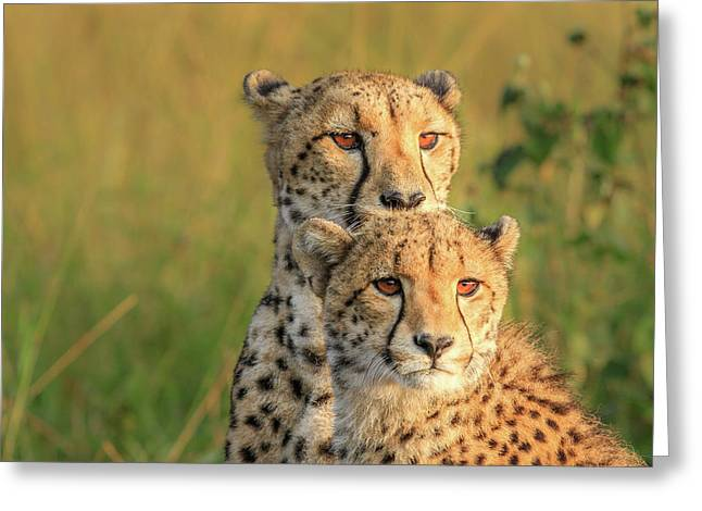 Double Team Greeting Card
