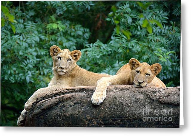 Double Trouble Greeting Card by Lisa L Silva