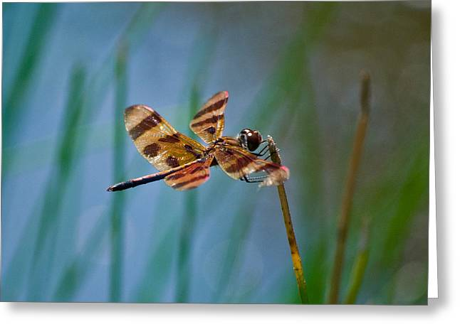Double Wings Ins 79 Greeting Card by G L Sarti