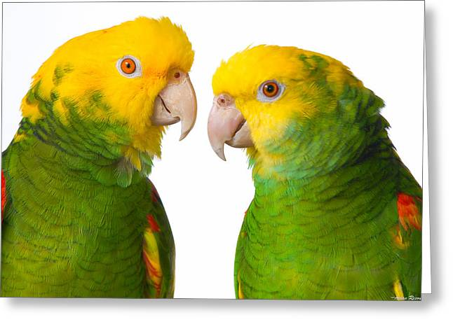 Double Yellow-headed Amazon Pair Portrait Greeting Card