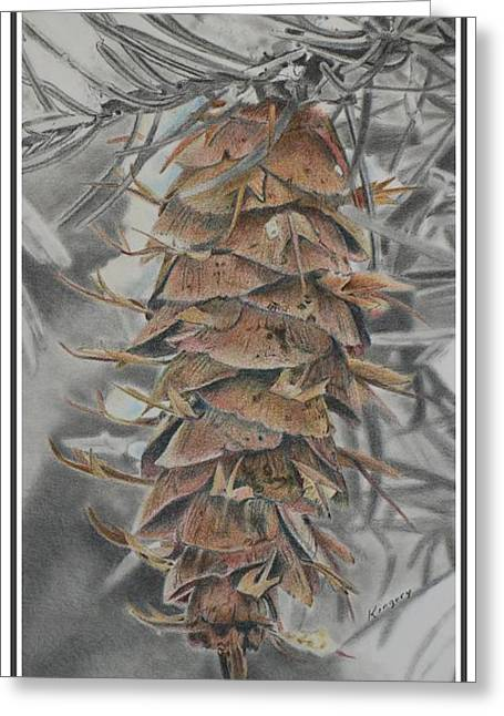 Douglas Fir Pine Cone Greeting Card