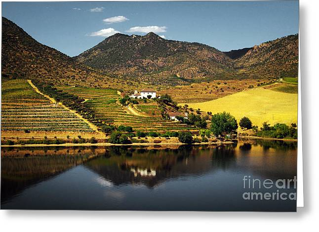 Douro Landscape Ill Greeting Card by Carlos Caetano