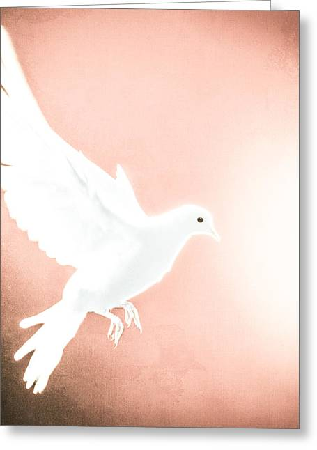 Dove In Flight Red Greeting Card