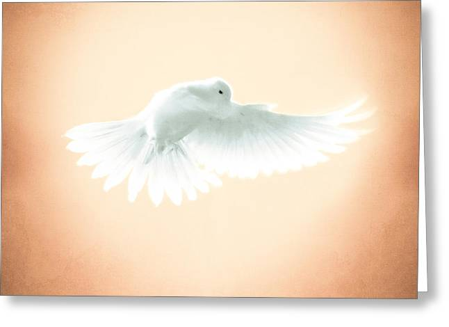 Dove In Flight Yellow Greeting Card by YoPedro