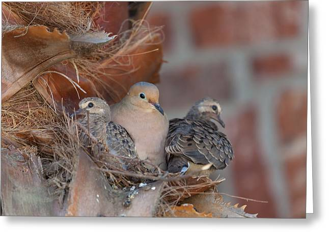 Greeting Card featuring the photograph Dove Nest 4 by Gregory Daley  PPSA