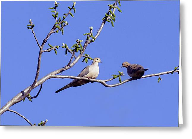 Greeting Card featuring the photograph Doves by David Lester