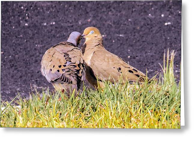 Doves Kisses Greeting Card by Zina Stromberg